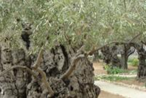 capture-gethsemane-2
